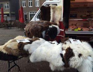 schapenvachten