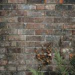 Wat moet je doen bij schimmelvorming op jouw muur